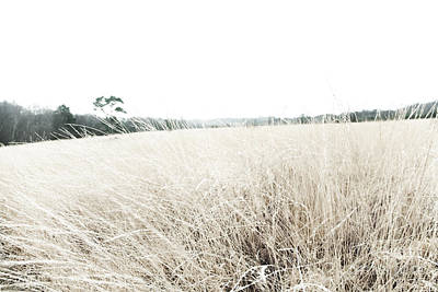Photographic Sketch Of A Winter Landscape Poster by Natalie Kinnear