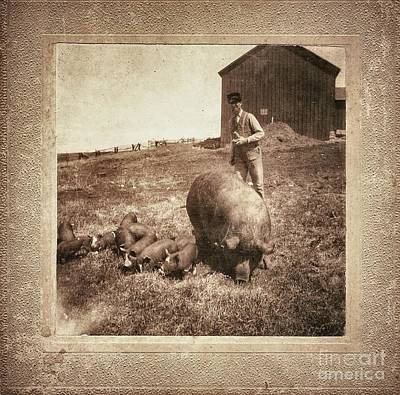 Pig Farm Poster by Angela Wright