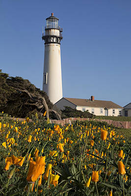 Pigeon Point Lighthouse And California Poppies Poster by Adam Romanowicz
