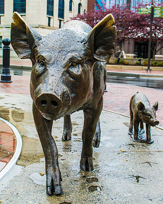 Pigs Of Asheville Poster by Molly Grabill
