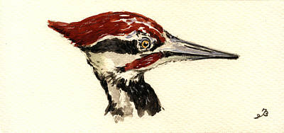 Pileated Woodpecker Head Study Poster by Juan  Bosco