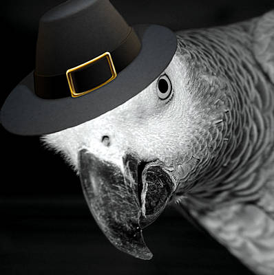 Pilgrim Parrot Poster by Mim White