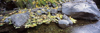 Pilot Creek In Autumn, Humboldt County Poster by Panoramic Images