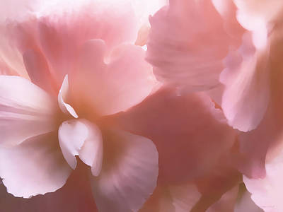 Pink Begonia Floral Poster by Jennie Marie Schell