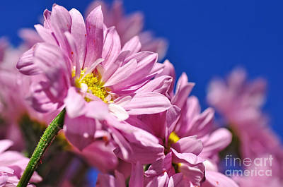 Pink Daisies In The Sky Poster by Kaye Menner
