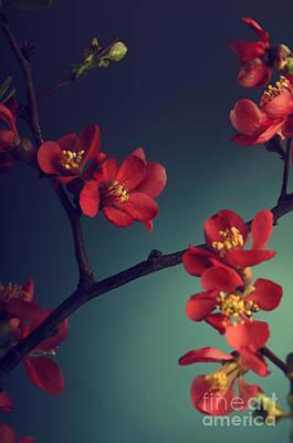Pink Flower Poster by Jelena Jovanovic