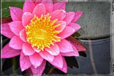 Pink Lotus Flower - Zen Art By Sharon Cummings Poster by Sharon Cummings