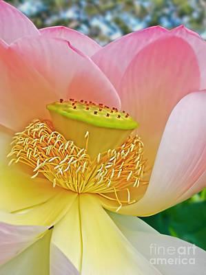 Pink Lotus Lily Poster by Kaye Menner