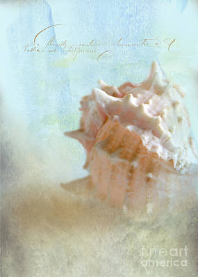 Pink Murex Seashell Poster by Betty LaRue