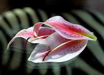 Pink Oriental Lily Reassembled 2 Poster by  Andrea Lazar