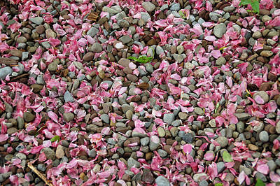 Pink Petals On Stones  Poster by Aimee L Maher Photography and Art Visit ALMGallerydotcom