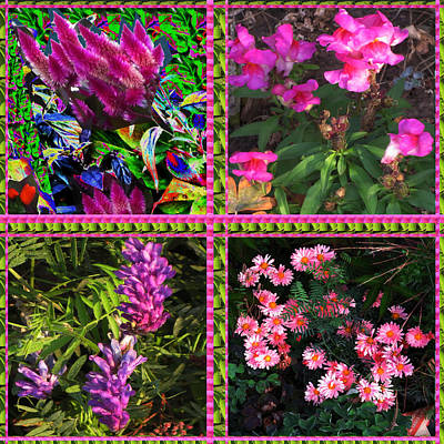 Pink Purple Flowers Captured At The Riverside Ridge At Oakville Ontario Canada Collage Beautiful     Poster by Navin Joshi
