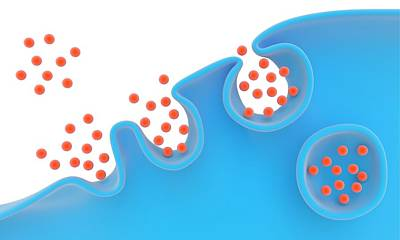Pinocytosis Poster by Science Photo Library