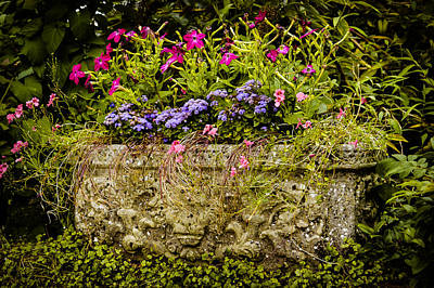 Planter Poster by Mark Llewellyn