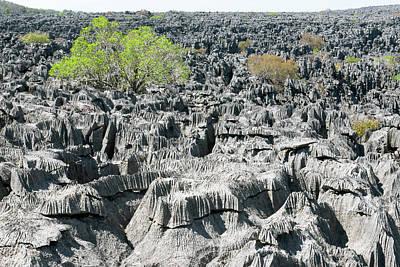 Plants Growing On Limestone Rocks Poster by Dr P. Marazzi