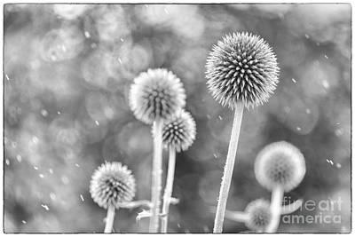 Plants In The Rain Poster by Natalie Kinnear