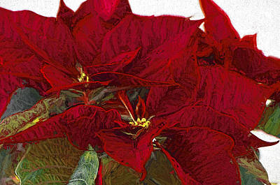 Poinsettia 3 Digital Painting On Canvas 2a Poster by Sharon Talson