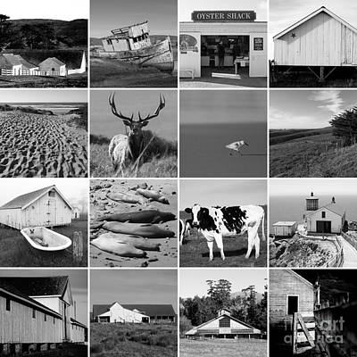 Point Reyes National Seashore 20150102 Black And White Poster by Wingsdomain Art and Photography