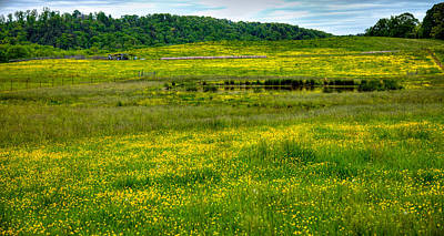 Pond Among The Buttercups Poster by David Patterson