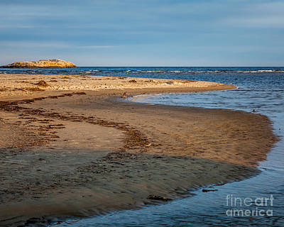 Popham Beach Curve Poster by Susan Cole Kelly