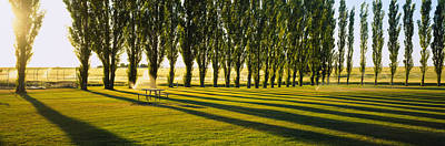 Poplar Trees Near A Wheat Field, Twin Poster by Panoramic Images