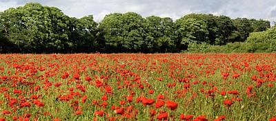 Poppy Field Poster by John Short