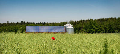 Poppy Flower In A Field And Barn Poster by Panoramic Images
