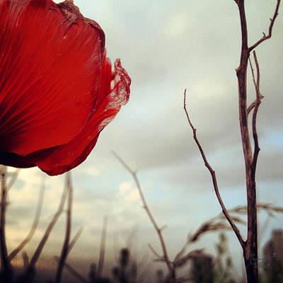 poppy V Poster by Renata Vogl