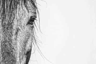 Portrait Of A Wild Mustang Poster by Bob Decker