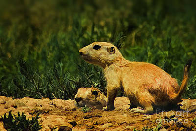 Prairie Dogs On Patrol Poster by Priscilla Burgers