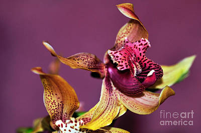 Pretty Orchid On Pink Poster by Kaye Menner