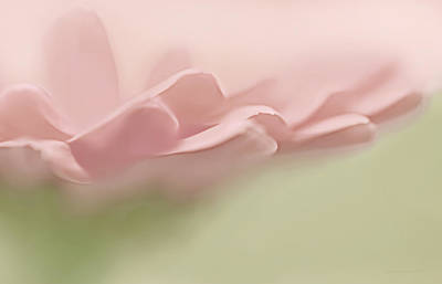 Pretty Pink Flower Petals Abstract Poster by Jennie Marie Schell