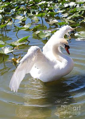 Pretty Swan Poster by Carol Groenen
