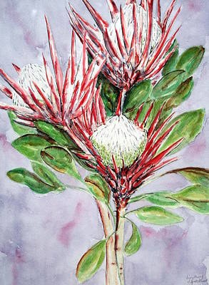 Proteas Poster by Lyndsey Hatchwell