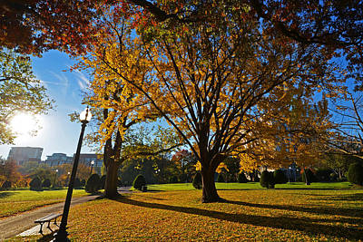 Public Garden Fall Tree Poster by Toby McGuire
