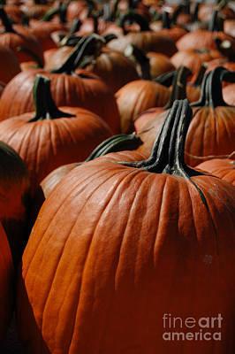 Pumpkin Harvest 1 Poster by First Star Art