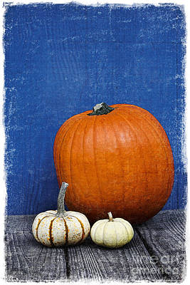 Pumpkins Poster by Elena Nosyreva