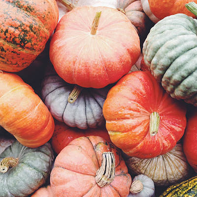 Pumpkins Galore Poster by Kim Fearheiley