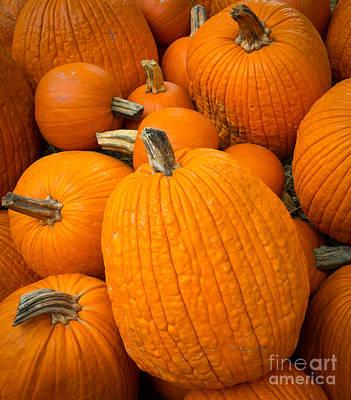 Pumpkins Poster by Inge Johnsson