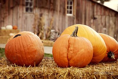 Pumpkins Poster by Juli Scalzi