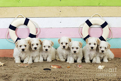 Puppy Dogs At The Beach Poster by John Daniels