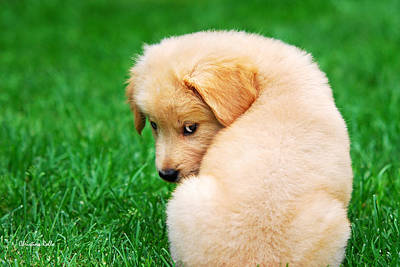 Puppy Love Poster by Christina Rollo