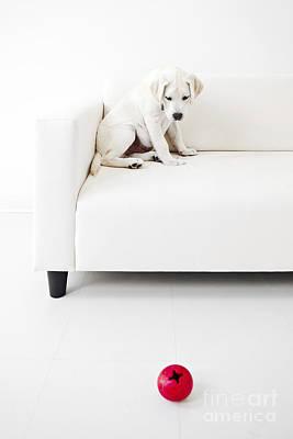 Puppy Problems Poster by Diane Diederich