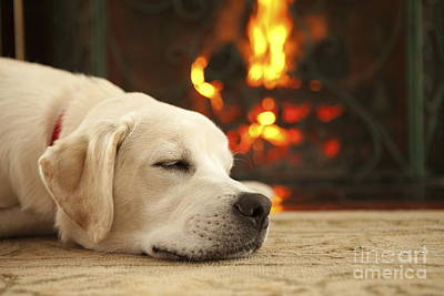 Puppy Sleeping By The Fireplace Poster by Diane Diederich