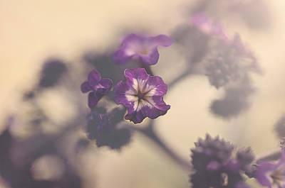 Purple Haze Poster by Faith Simbeck