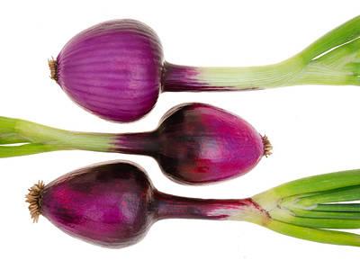 Purple Onions  Poster by Jim Hughes