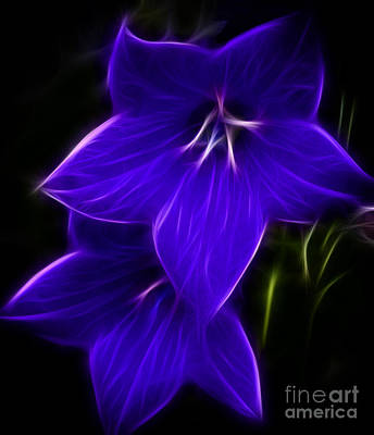 Purple Passion Poster by Joann Copeland-Paul