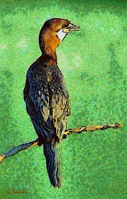 Pygmy Cormorant Poster by George Rossidis