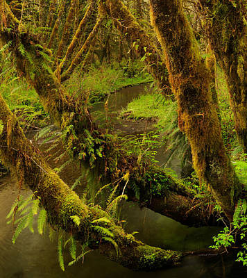 Quinault Rain Forest Poster by Leland D Howard