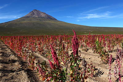 Quinoa Field Chile Poster by James Brunker